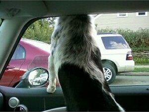 Sasha head out window